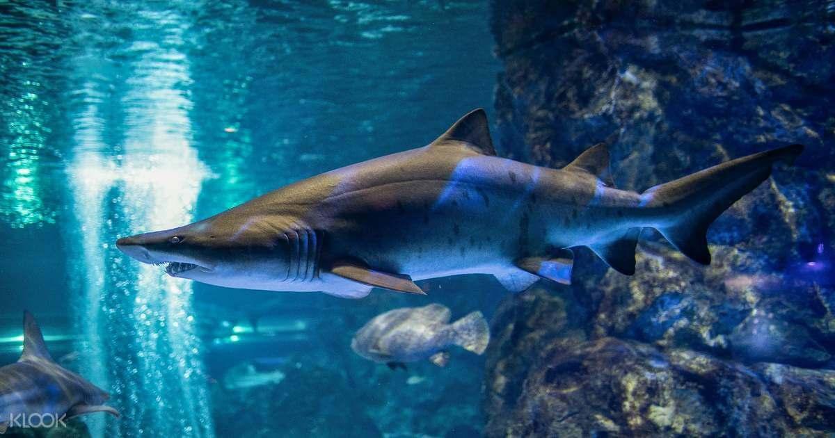 พิพิธภัณฑ์สัตว์น้ำโคเอ็กซ์ โซล (COEX Aquarium)