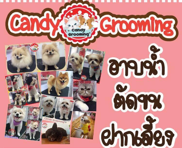 Candy Grooming ร้านอาบน้ำ ตัดขน ฝากเลี้ยง พระราม2