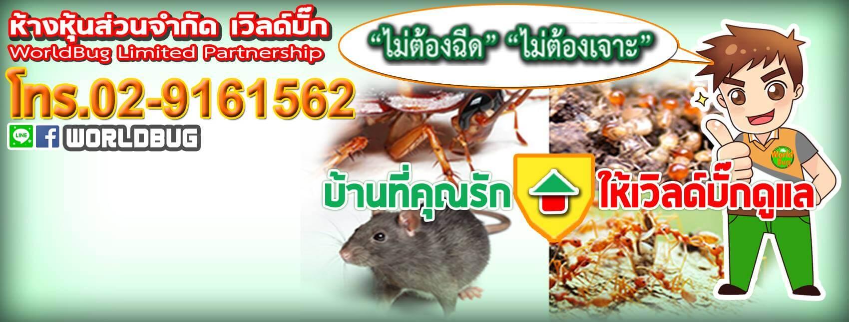 Worldbug กำจัดปลวก - กำจัดปลวกมืออาชีพมั่นคงปลอดภัย