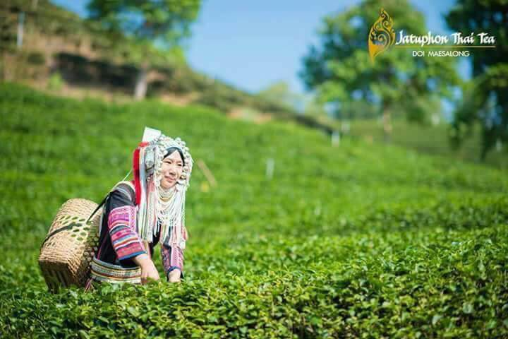 โรงงานผลิตใบชา