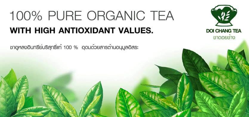 ชาดอยช้าง Doi Chang Tea โรงงานผลิตใบชา