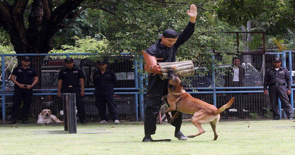 โรงเรียนฝึก Professional K9 ฝึกสุนัข ฝึกหมา