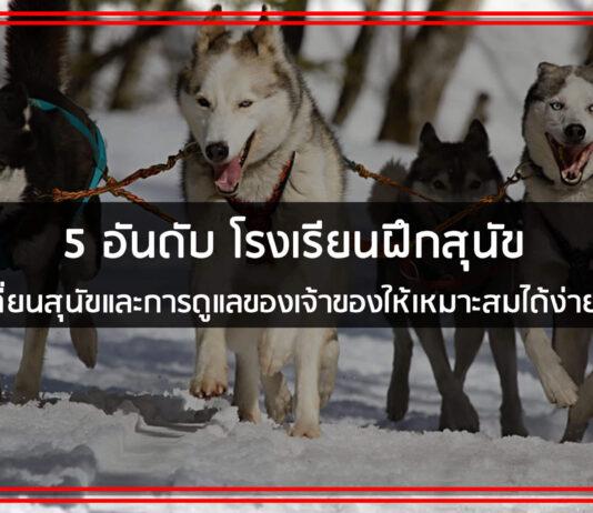 โรงเรียนสอนสุนัข รับฝึกสุนัข กับผู้เชี่ยวชาญจาก ศูนย์ฝึกสุนัข