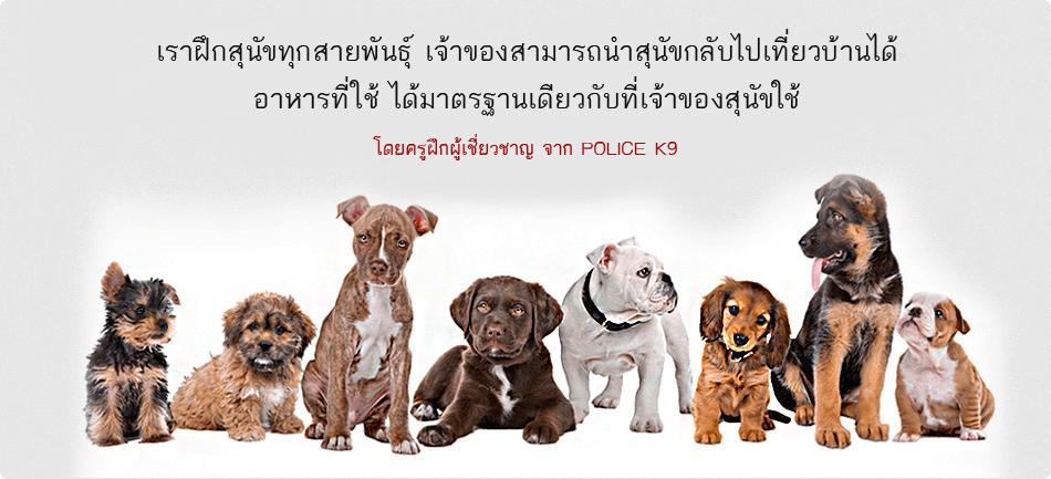 Thai K-9 โรงเรียนสอนสุนัข รับฝึกสุนัข กับผู้เชี่ยวชาญจาก ศูนย์ฝึกสุนัข
